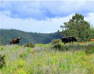 赏普达措国家公园生态壮美风光